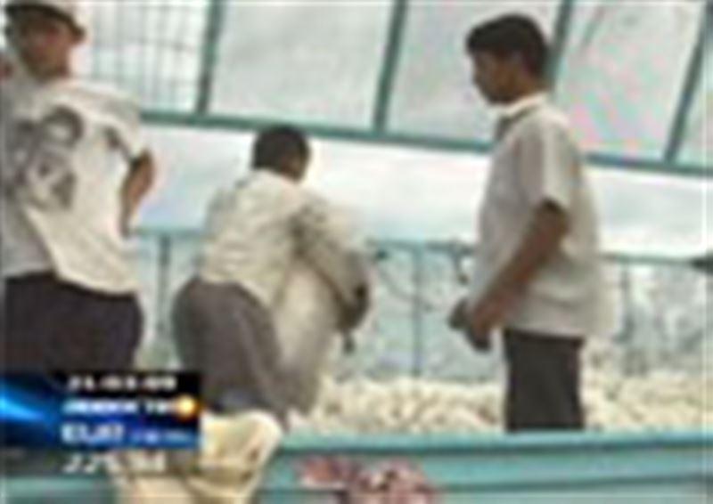 В Южном Казахстане школьники вместо учебы убирали частные хлопковые поля, тех, кто отказывался, избивала завуч