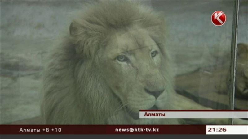 В алматинском зоопарке можно «усыновить» слона или «удочерить» ламу
