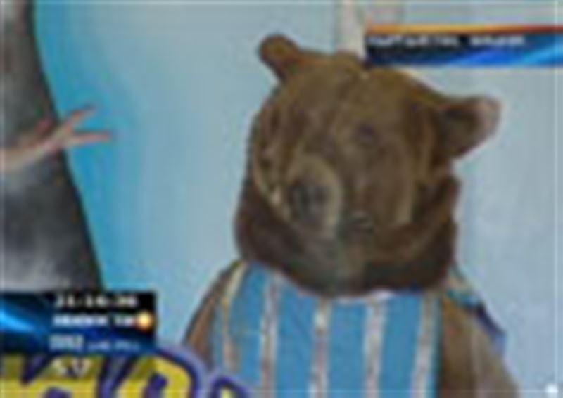 В бишкекском цирке  дрессированный медведь напал на людей, есть жертвы