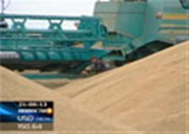 Зерновой кризис  и в Акмолинской области: местные крестьяне ломают голову, где сохранить рекордное количество собранного зерна