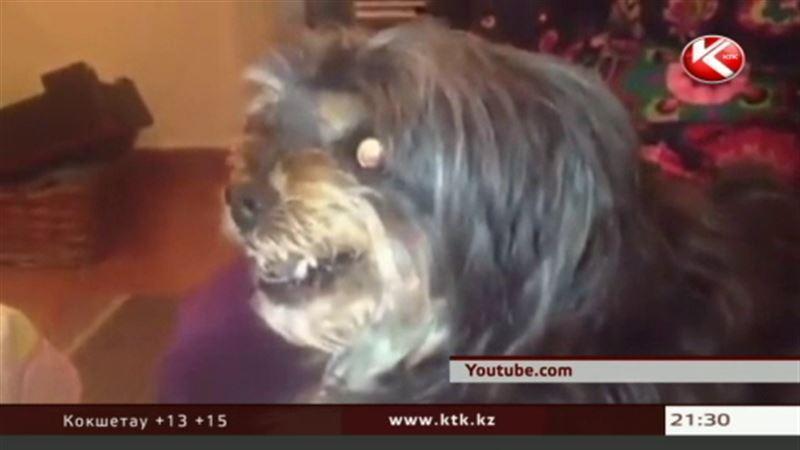Звездой интернета стал пес-фанат, который явно недолюбливает «Барселону»