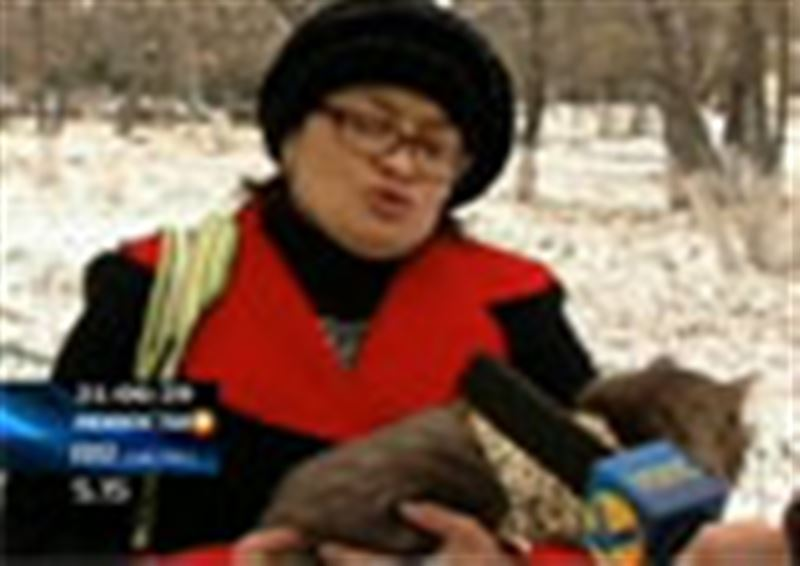 Жительница города подала в суд на ветеринара – она обвиняет врача в издевательстве над котом
