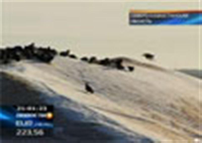 Катастрофа с урожаем: в Северном Казахстане выпал снег, тонны неубранной пшеницы гниют под открытым небом