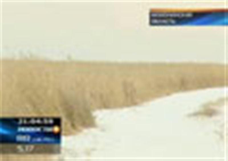 Премьер-министр Казахстана объявил о начале спецоперации по спасению собранного на полях страны хлеба