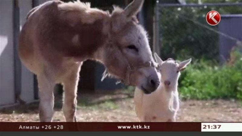 Ролик о трогательной дружбе козла и ослика стал хитом интернета
