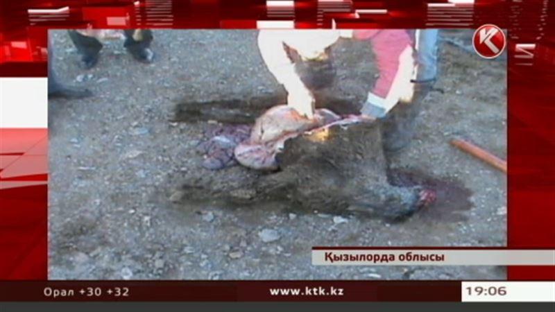 В Кызылординской области остригли овец, и они погибли от переохлаждения