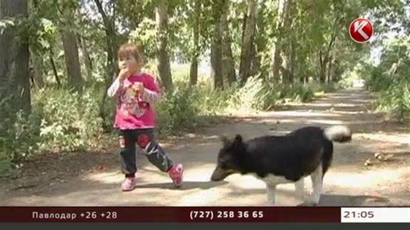 Обычная дворняга спасла жизнь маленькой девочки в Акмолинской области