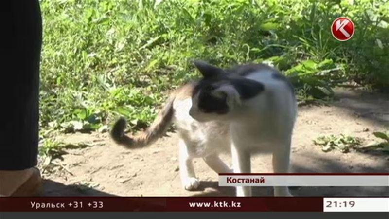Жителя Костаная будут судить за убийство кота
