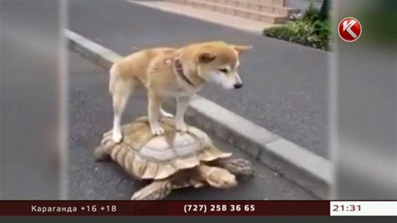 Обнаружена самая ленивая собака в мире