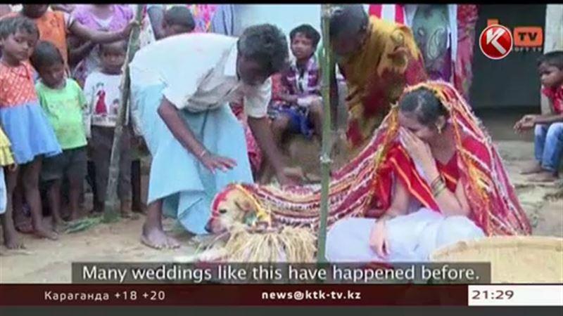 Жительница Индии вышла замуж… за бездомную собаку