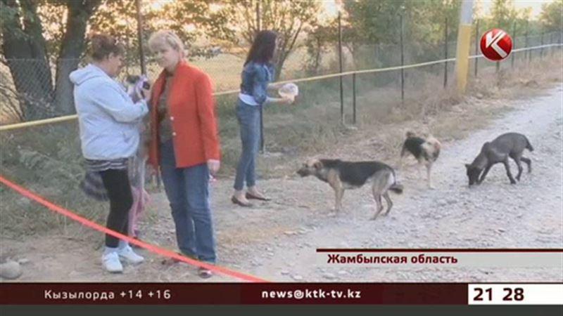 Пятьсот собак и кошек обрели дом в Таразе