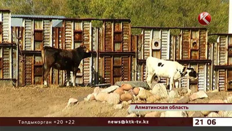 У жителей Алматинской области подтвердился диагноз сибирская язва