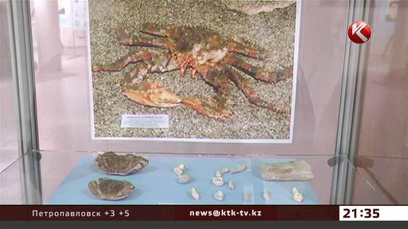 В Актау выставили моллюска, которому 500 миллионов лет