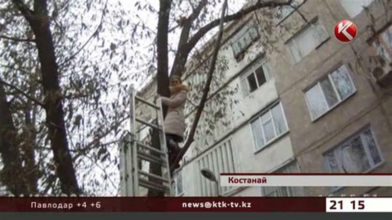 Кошке и ее хозяйке, застрявшим на дереве, понадобилась помощь спасателей