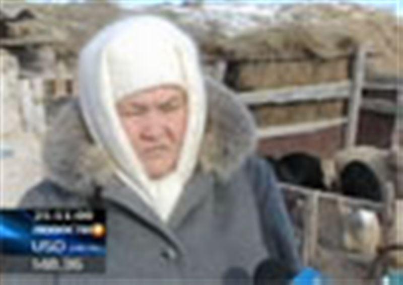 В Актюбинской области из-за бруцеллеза массово уничтожают крупный рогатый скот