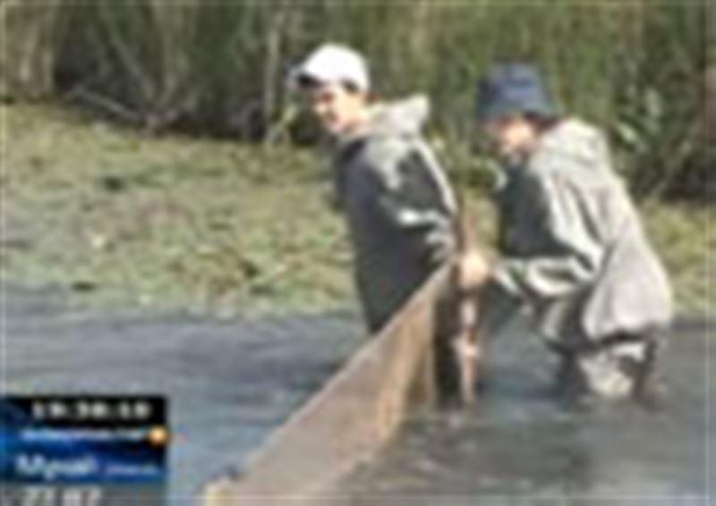 Павлодар: да су қоймаларында 70 тоннадан аса шабақ қырылып қалды