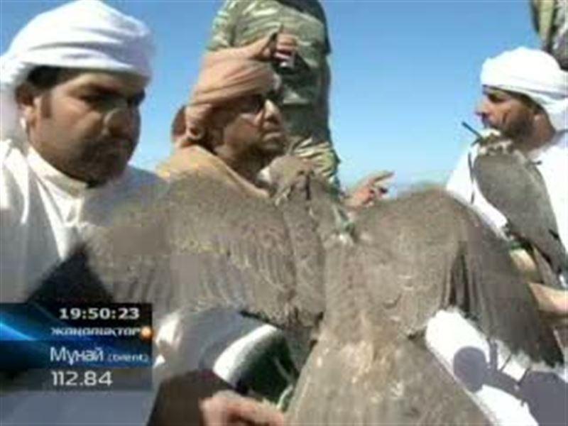 ШҚО: сирек құстарды сақтап қалуға арабтар атсалыса бастады