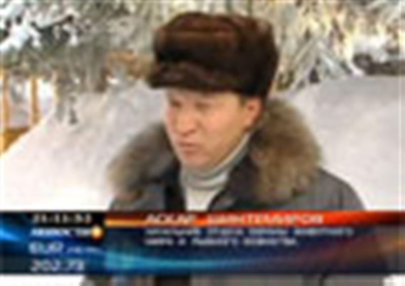 В Восточном Казахстане аномально снежная зима стала причиной голода среди диких животных и птиц