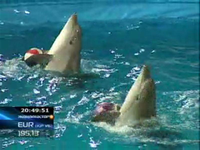 Алматыға  дельфиндер циркі   келді!