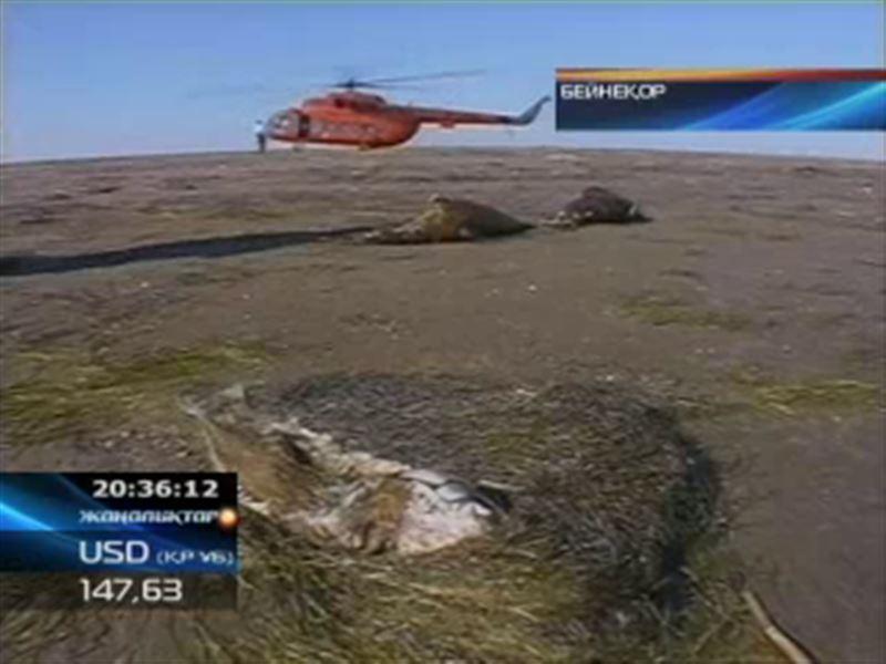 Каспийдегі итбалықтар теңіздегі қауіпті химиялық қоспалардан уланған
