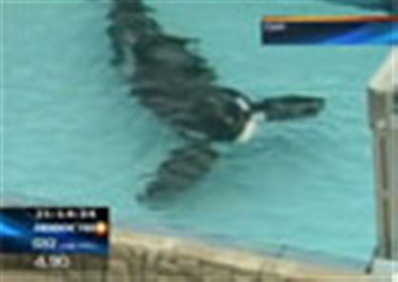 Трагедией завершилось представление в океанариуме американского города Орландо
