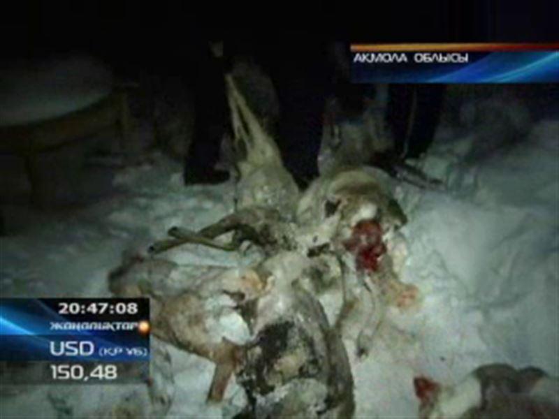 Ақмола облысында 8 елік атып алған браконьерлер ұсталды