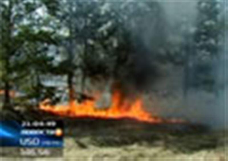 В Акмолинской области загорелся сосновый бор