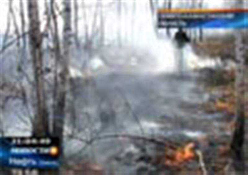В Северо-Казахстанской области бушуют лесные пожары. Выгорело уже  более 500 гектаров леса