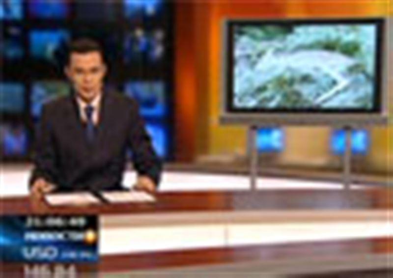 Пастереллез уничтожил уже почти половину популяции уральских сайгаков