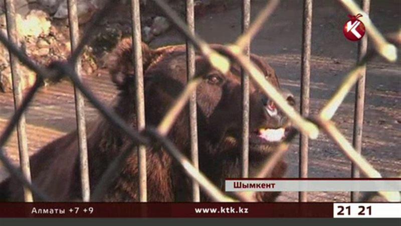В шымкентском зоопарке медведица, испугавшись фейерверка, съела детенышей