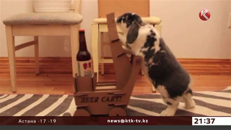 Американец научил кролика носить ему пиво