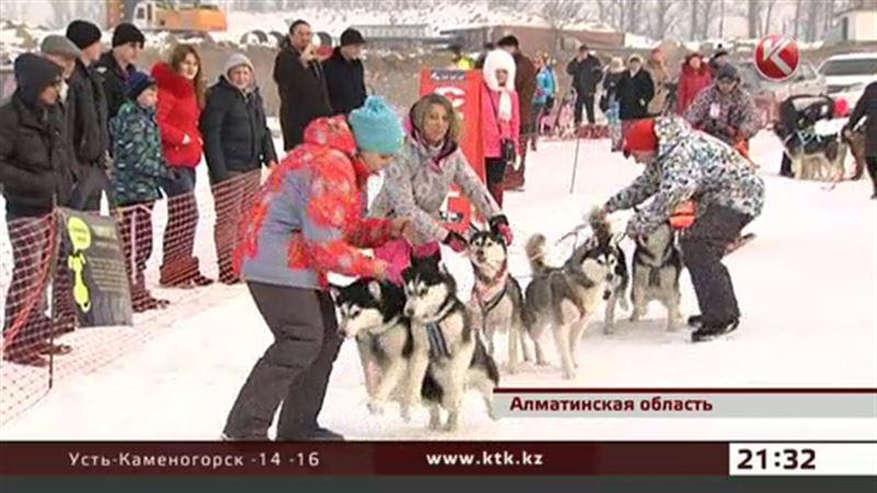 В Алматинской области состязались собаки – на упряжках