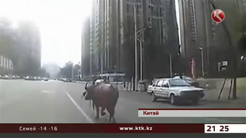 В Китае сбежавший бык ранил людей и повредил авто