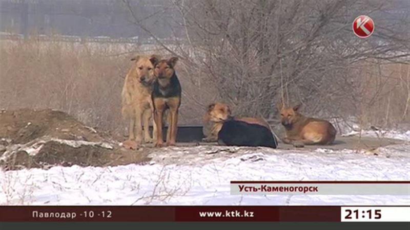 Усть-каменогорцы выходят на улицу с палками, чтобы отбиваться от собак