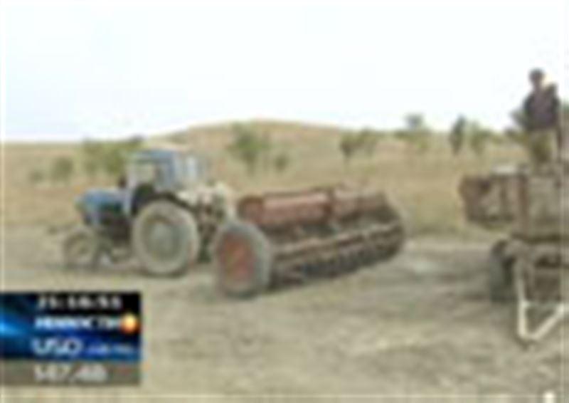 Казахстанские фермеры рискуют не только потерять будущий урожай, но и не получить за это никакой компенсации