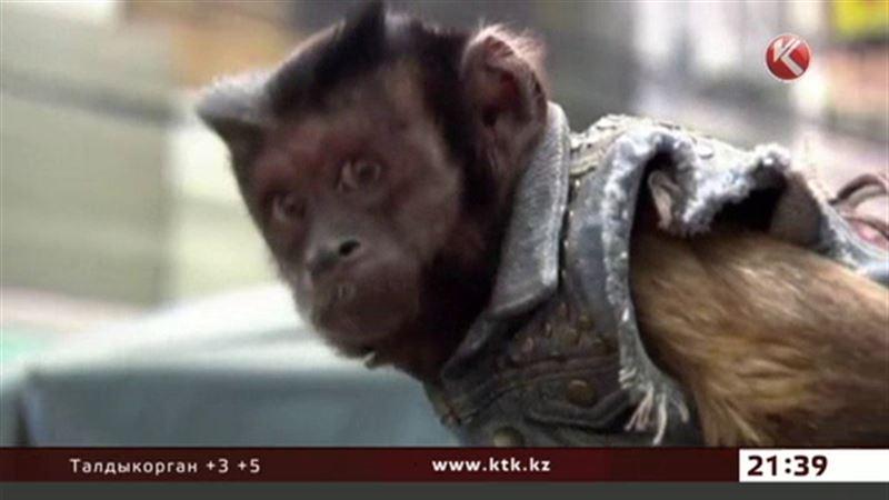 За вклад в кинематограф наградили обезьяну