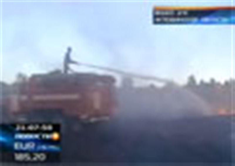 В Актюбинской области горит степь. В самом крупном за последнее время пожаре заживо сгорела целая отара овец