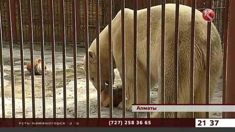 Алматинский зоопарк отметил день полярного медведя