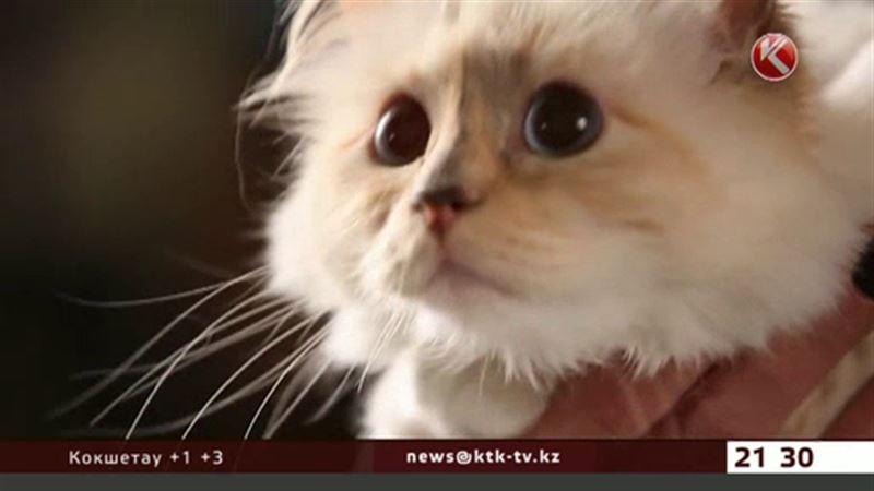 Кошка заработала своей мордой три миллиона евро