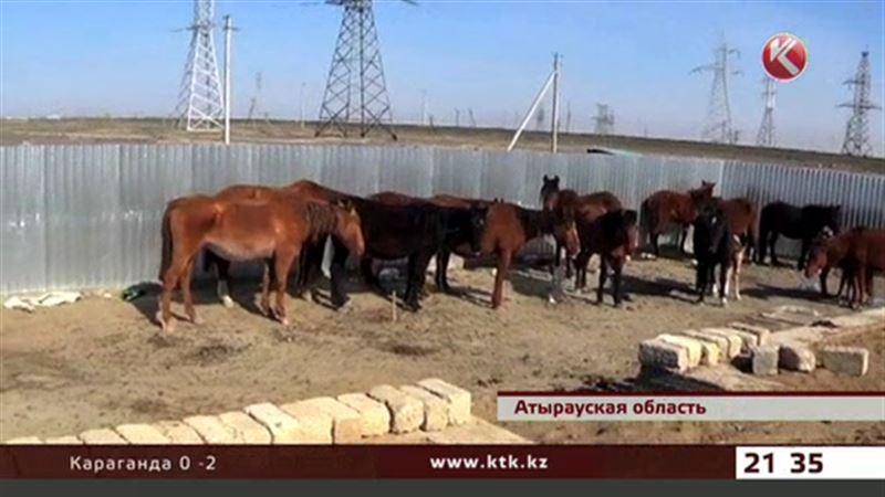 В Атырауской области задержали скотокрадов, которые угнали табун лошадей