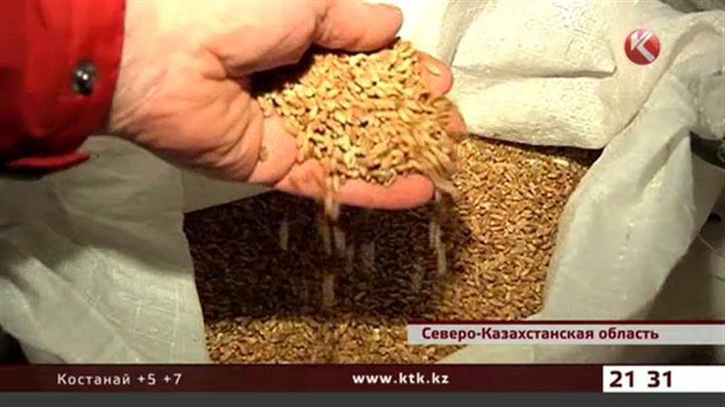 Земледельцы СКО благодарны подешевевшему рублю