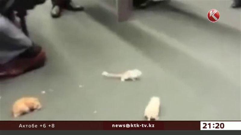 Крысы атаковали парламент Бразилии