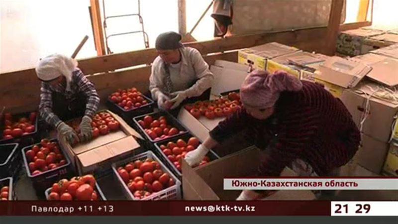 Южноказахстанские крестьяне заявляют, что их теплицам грозит разорение