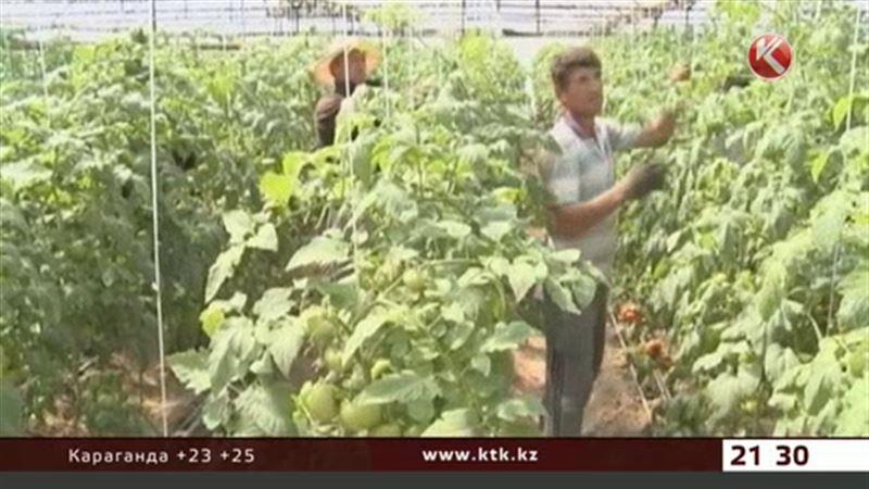 В Казахстане готовят к открытию птицефабрики, молочные фермы и теплицы