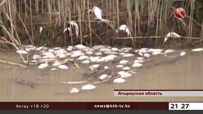 Уральские рыбинспекторы обнаружили около двух тонн мертвой рыбы