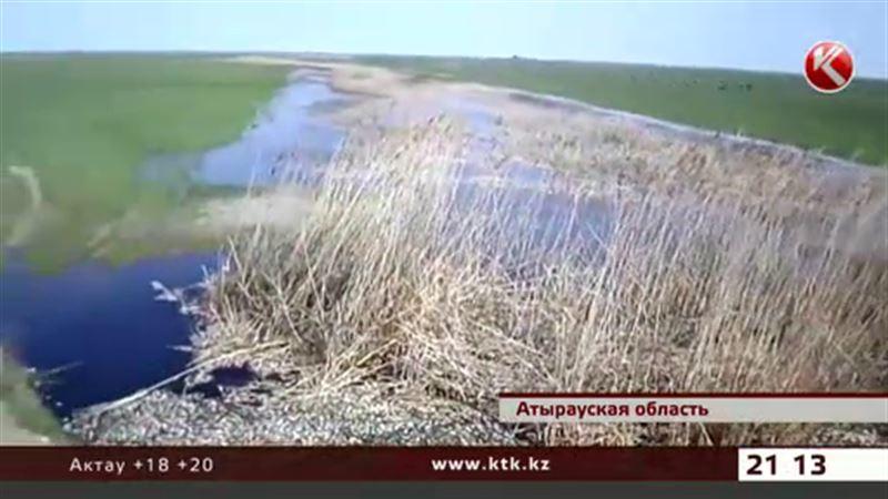 В Атырауской области снова массово гибнет рыба