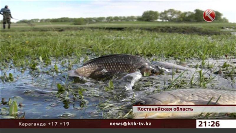 В костанайской глубинке на огородах собирают рыбу