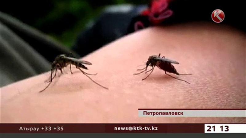 В Петропавловске нашествие комаров