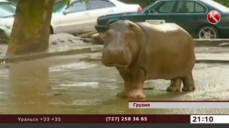 Наводнение в Тбилиси: алматинский зоопарк готов помочь коллегам