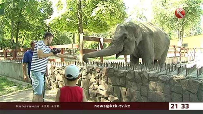 Слонихе из алматинского зоопарка запретили пить вино